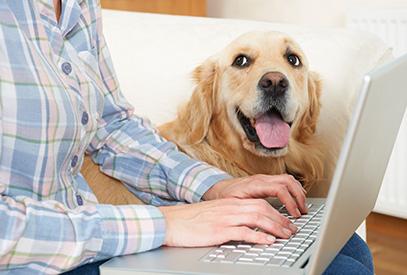 un comparateur de mutuelle chien