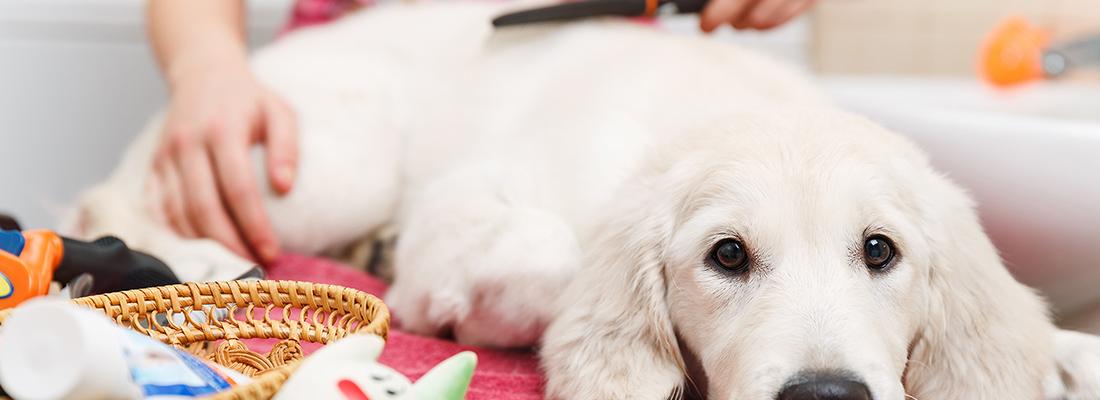 education et soins des chiens