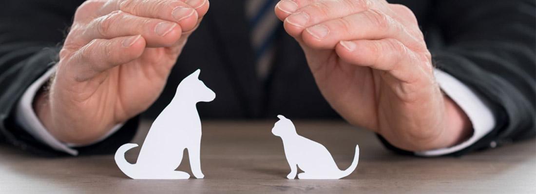 comparateur d'assurances animaux