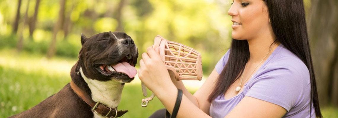assurance pour un chien